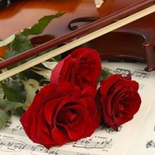 roses_violin