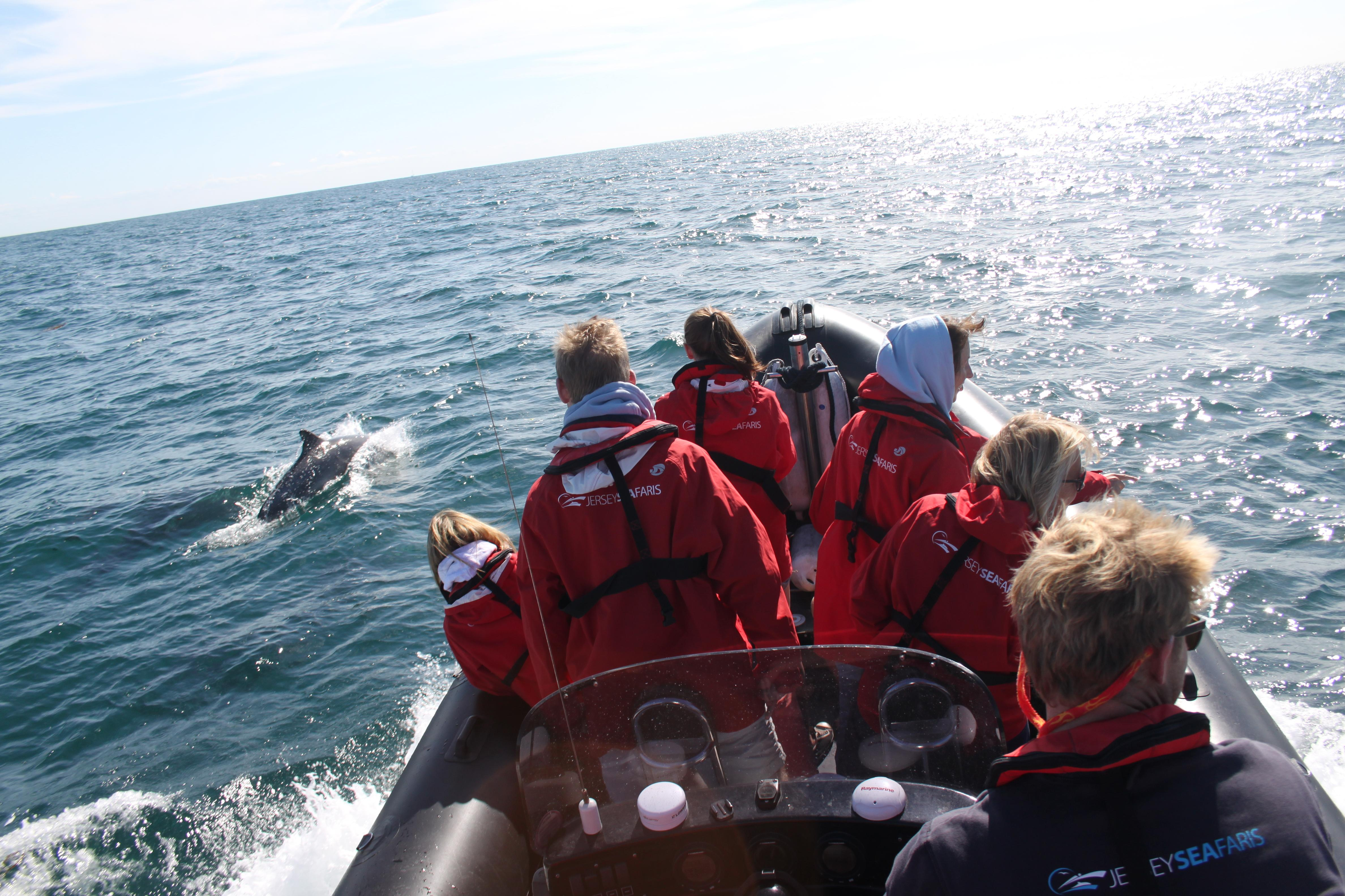 The Wild Side Of Jersey - Seafaris RIB Trip