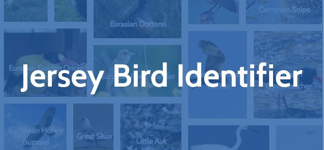 Jersey Bird Guide