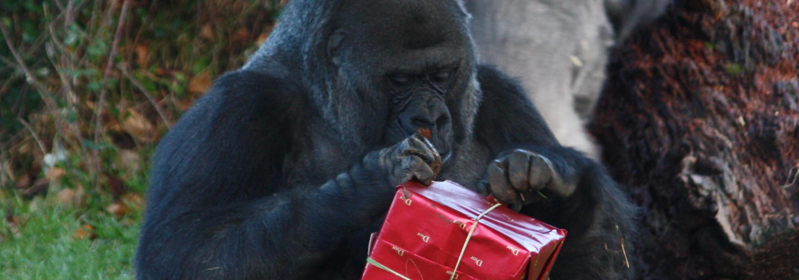 Jingle in the Jungle, Jersey Zoo