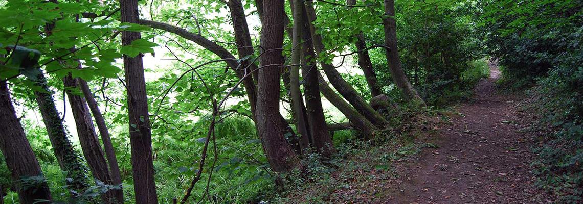 Longueville Woodland Trail