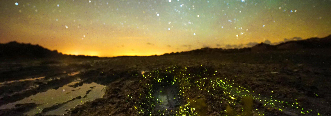 Bioluminescence on the beach, Jersey