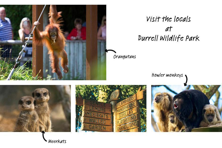 Visit the Locals at Durrell